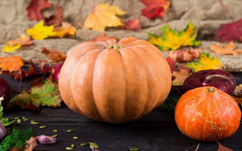 Zucca Halloween Essiccare.La Zucca La Regina Di Halloween